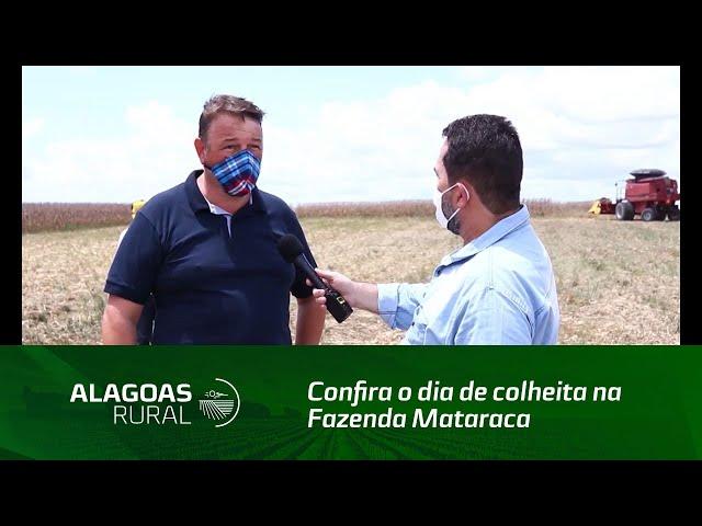 Confira o dia de colheita na Fazenda Mataraca