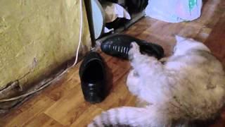 кот примеряет ботинки