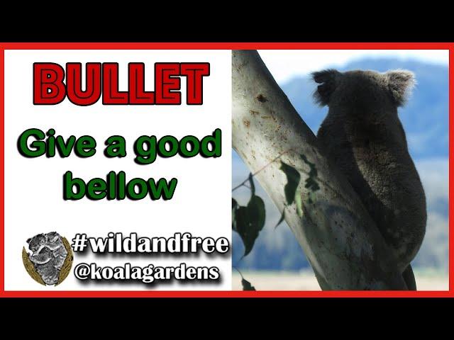 Bullet - give a good bellow