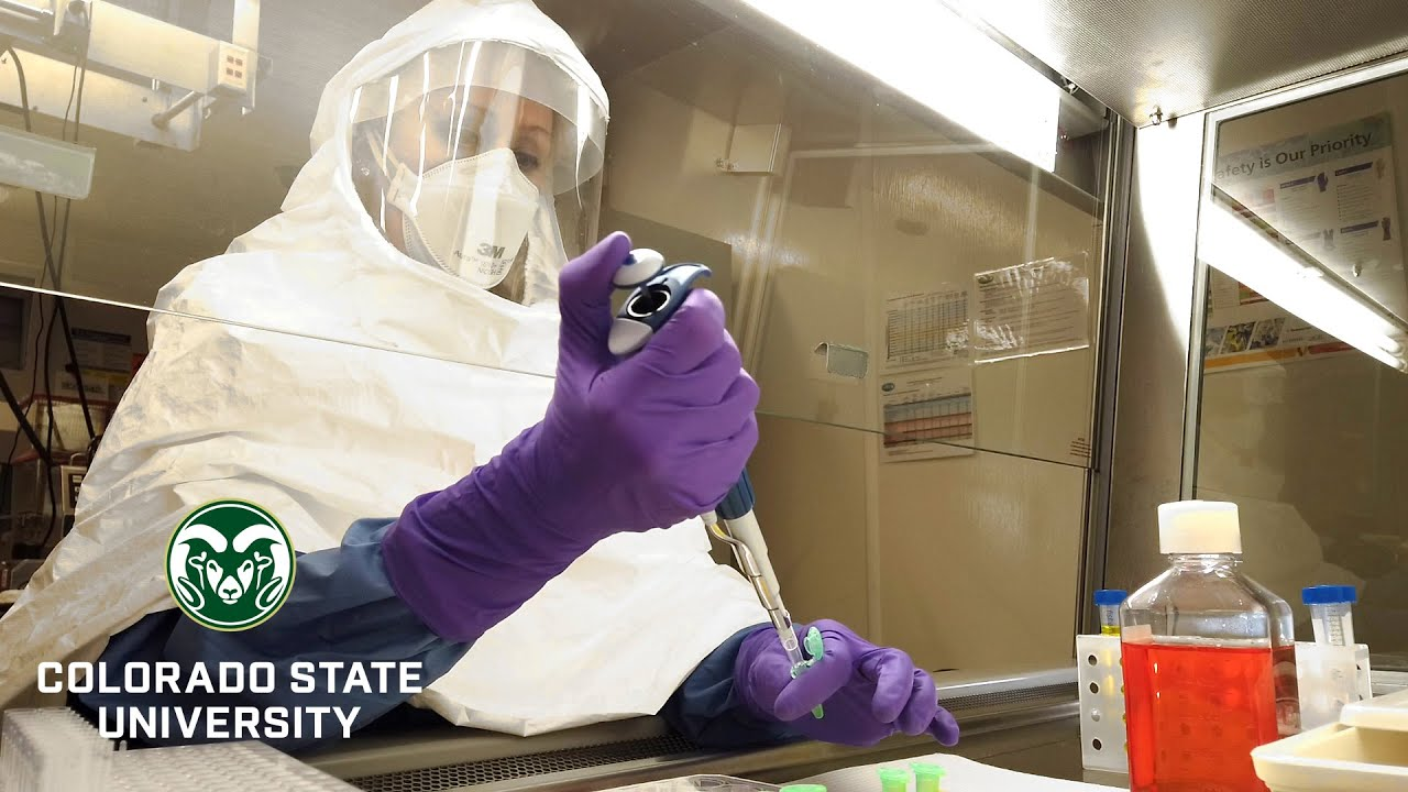 CSU Researchers Pursuing Coronavirus Vaccine That Uses An Existing Platform To Inactivate Pathogens