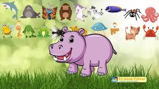 Animals Names For Kid Funny Animal  Fun Video Wild Animals