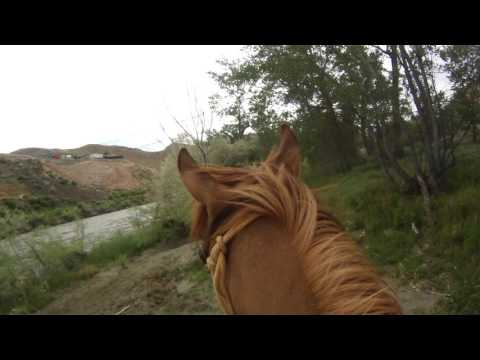 Horse Ride by the Truckee River