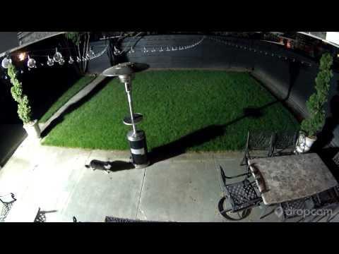 Motion Activated Sprinkler Scares Cat
