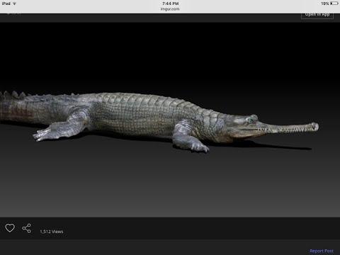 Dinosaur battlegrounds hell creek formation animal fauna models