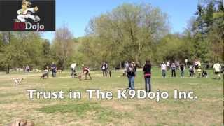 K9dojo Stay Means Stay Advanced Dog Training With Heavy Distraction