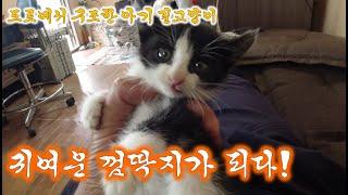 도로에서 구조한 아기 길고양이, 영남씨 껌딱지가 되다!//A kitten rescued from the road becomes a cute stalker!