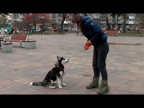 Житомир.info | Новости Житомира: Волонтери розповіли про випадки жорстокого поводження з тваринами у Житомирі - Житомир.info