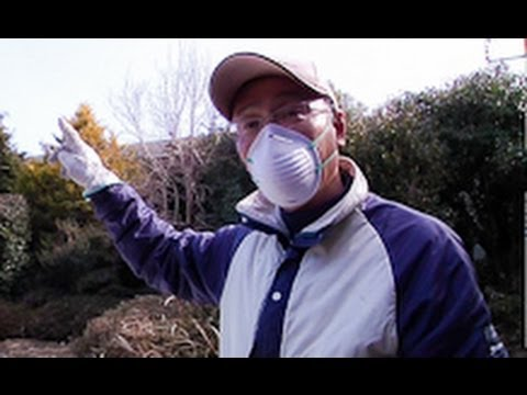 Fukushima Now: in the Aftermath of Nuclear Disaster