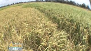 ASEAN Connect Episode 8 : Rice… A triumph for Vietnam