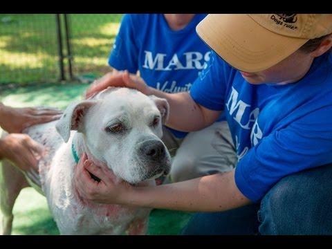 Helping Nashville Pets Find Forever Homes