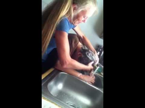 Hair Wash In Sink