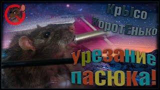 Лечение крыс | Урезание пасюка, или операция у Малого. (Wild Rats | Дикие Крысы)