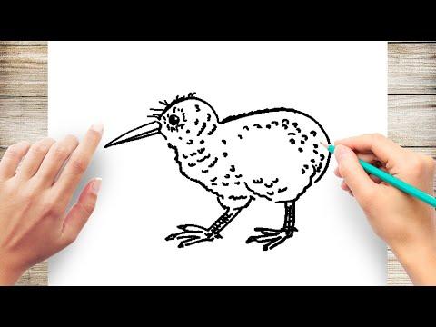 How To Draw Kiwi Bird Step By Step For Kids Youtube