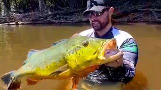 CHASING THE AMAZON'S BIGGEST PEACOCK BASS! *My Personal Best*