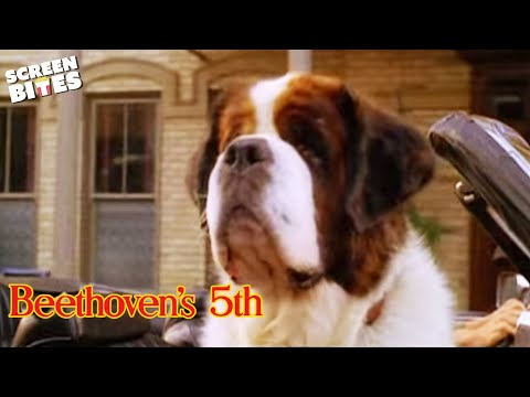 Beethoven's 4th is listed (or ranked) 28 on the list The Best Judge Reinhold Movies