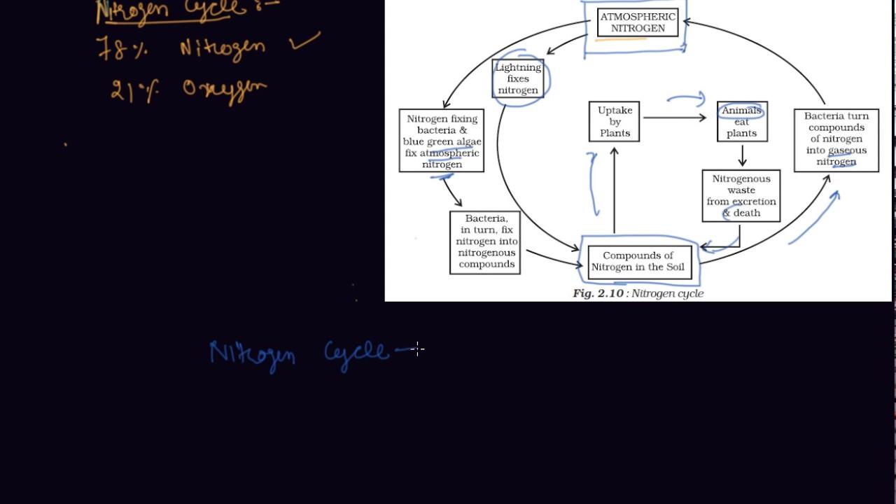 nitrogen cycle class 8 biology microorganisms friend and foe [ 1280 x 720 Pixel ]