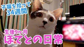 子猫を拾って34週間・ぽてとの日常【生後9ヶ月】