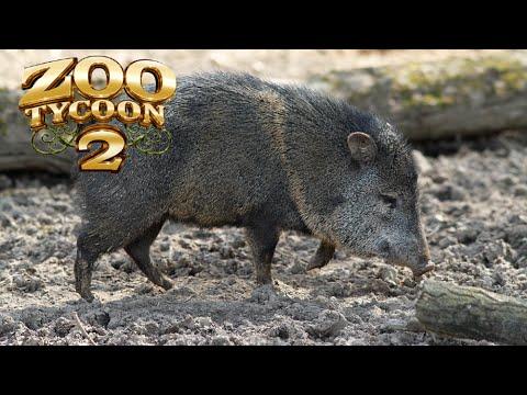 Zoo Tycoon 2: Collared Peccary Exhibit Speed Build