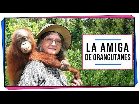 MUJERES EN LA CIENCIA   Biruté Galdikas: La amiga de los orangutanes.