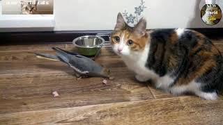 Приколы с животными - наглая чайка | new crazy animals 44