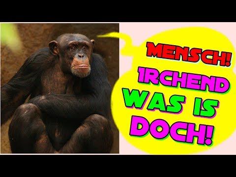 geburtstagsgrüße-lustig-#geburtstagsgruß-whatsapp-geburtstagsvideo
