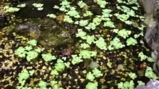 Frog Sounds Bird