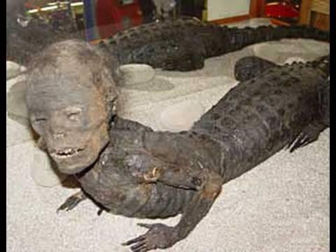 JAKE incredible hybrid human alligator creature