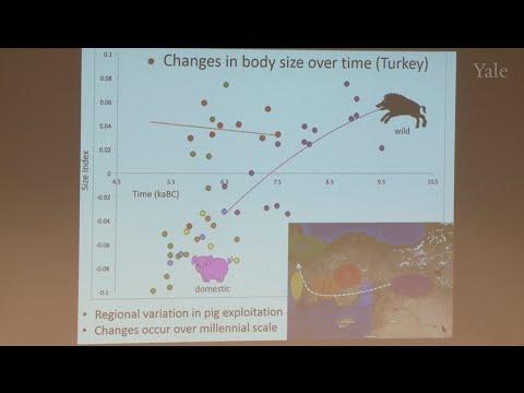 Pig Out Panel 1:  Porcine Pre-History: Domestication