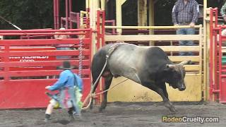 Liberty Pro Rodeo Caught Shocking Bulls