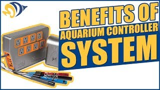 The Benefits of an Aquarium Controller System