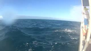 Spinner Dolphins in the air + underwater- Fiji
