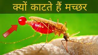 मच्छर काटने पर खुजली क्यों होती हैं || why mosquito bite itch
