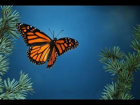 Il volo di una farfalla andrea carri youtube for Immagini farfalle per desktop