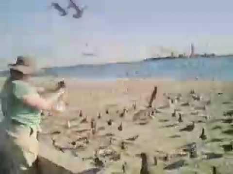 Feeding Gulls - Long Beach, CA