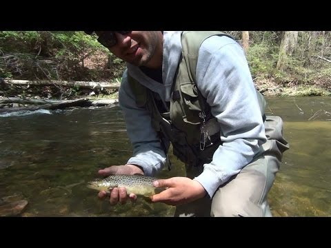 Stony Creek Trout Fishing Pennsylvania 2014