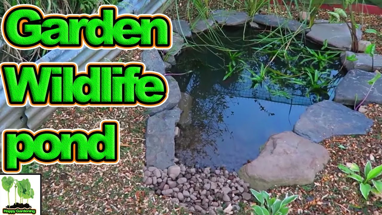 Step by step how to build a wildlife pond for your garden for How to build a small lake