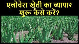 एलोवेरा की खेती का व्यापर कैसे शुरू करें ? |  Aloe vera ki kheti ki jankari in hindi