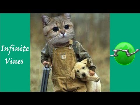 TRY NOT TO LAUGH (HARDEST VERSION)  Funniest CAT & DOG Vines