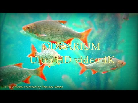 ODRARIUM - ZOO in Wrocław - Ultra HD video 4K