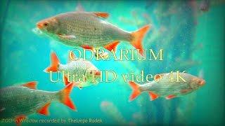 ODRARIUM - ZOO in Wrocław - Ultra HD video 4K