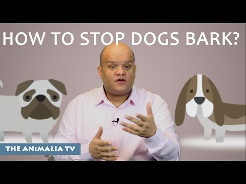 How To Stop Dogs From Barking? ( 3 Points)