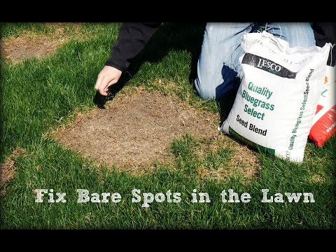 How To Seed And Repair Bare Spots in the Lawn