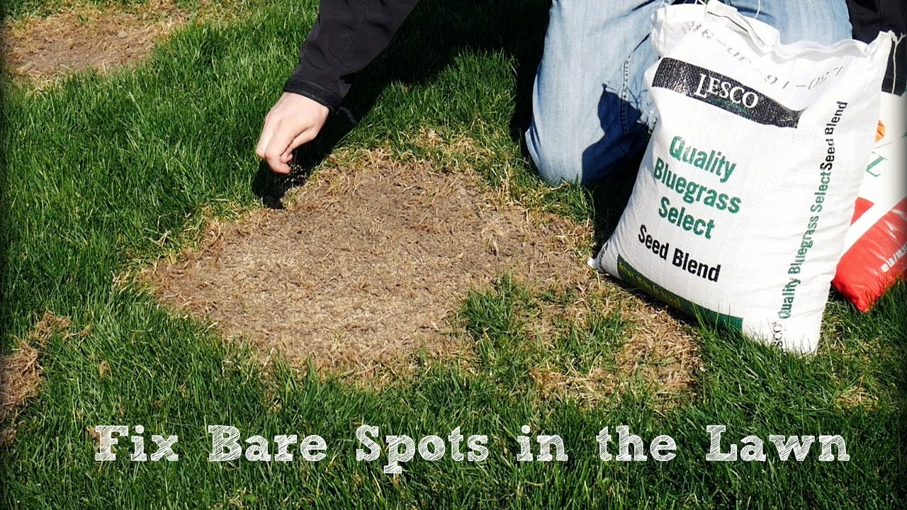 How To Seed And Repair Bare Spots In The Lawn Youtube If You39re Not Sure Patch Drywall There39s Plenty Of Videos On