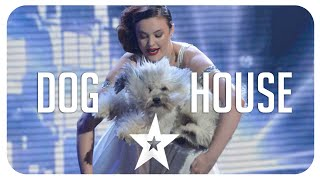 Best of Got Talent Dog performance/auditions from around the world