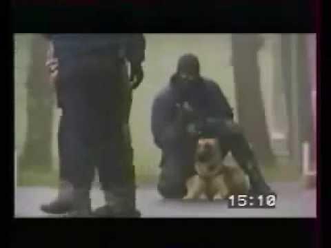 SORPRENDENTE PERRO POLICÍA EN ACCIÓN!!