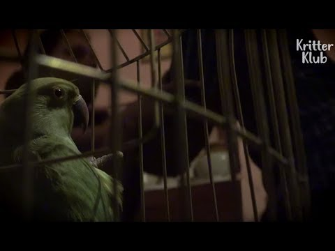 Parrot's Testimony Solves