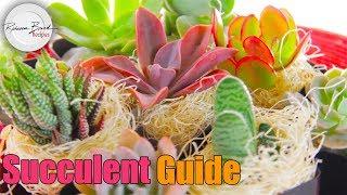 How to Plant Succulents | Succulent Guide of Drought Tolerant Garden
