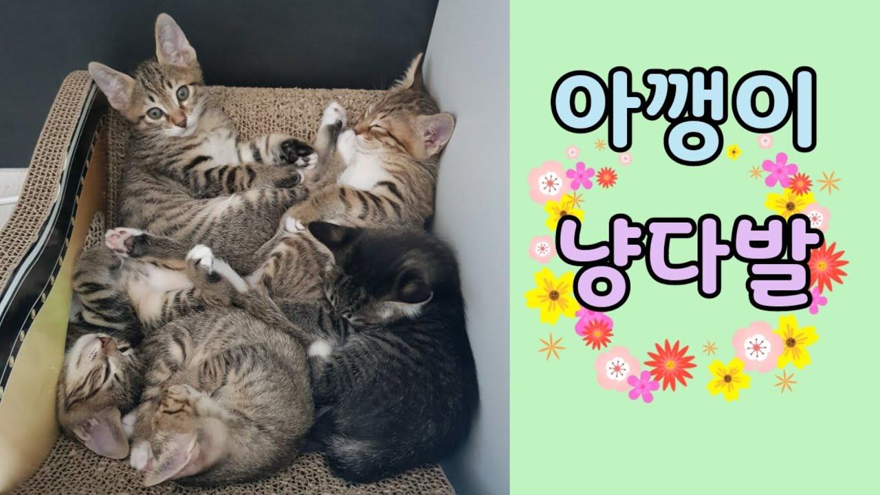 다섯 쌍둥이 아기고양이 꽃다발 lovely kitty 아깽이 냥다발 cute kitten 우다다 캣휠 타는 새끼고양이 cute cat