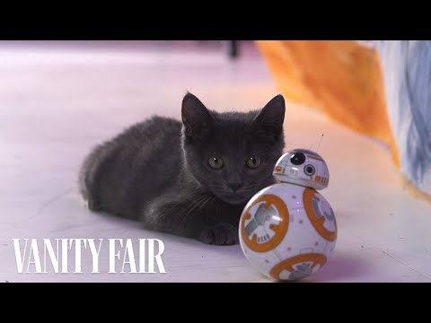 Kittens And 'Star Wars' Droid BB-8 Do Not Mix