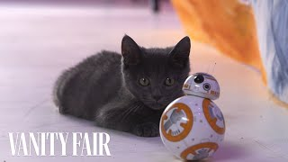 New Star Wars BB-8 Toy Proves Kittens Work for the Dark Side
